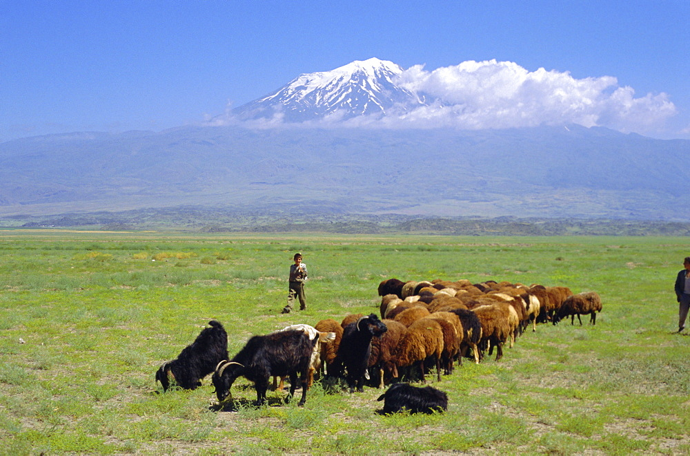 Herd of goats and goatherder in the plains beneath Mount Ararat, Turkey, Europe