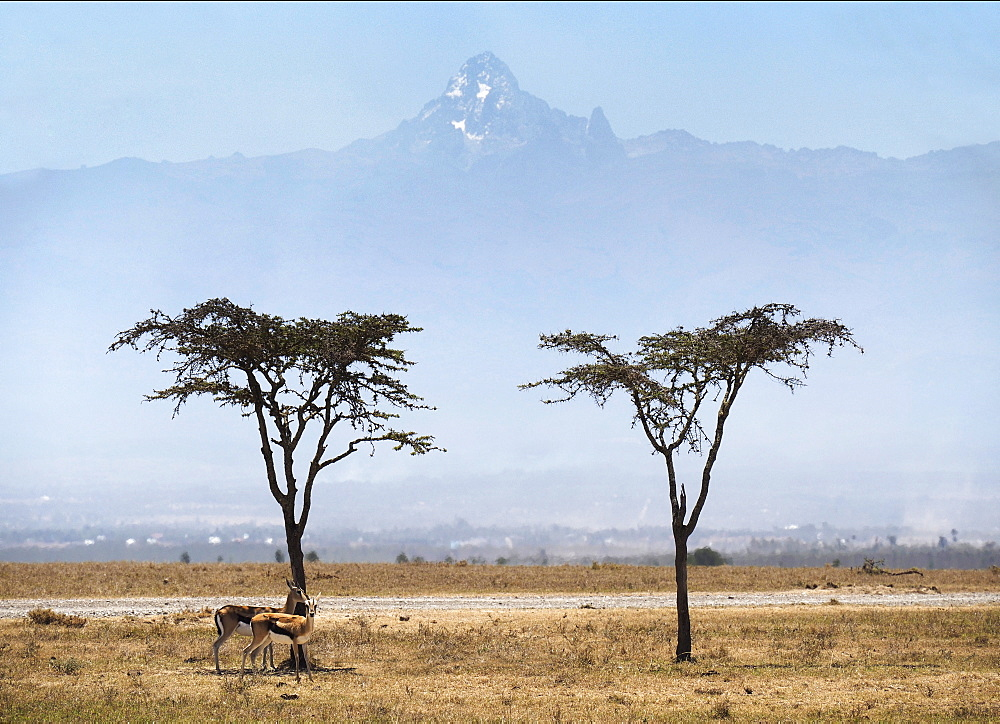 Acacia trees with Mount Kenya on Ol Pejeda Conservancy, Central Kenya, East Africa, Africa