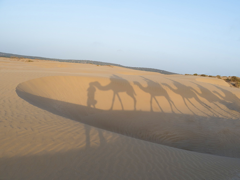 Essaouira beach camel shadows, Morocco, North Africa, Africa