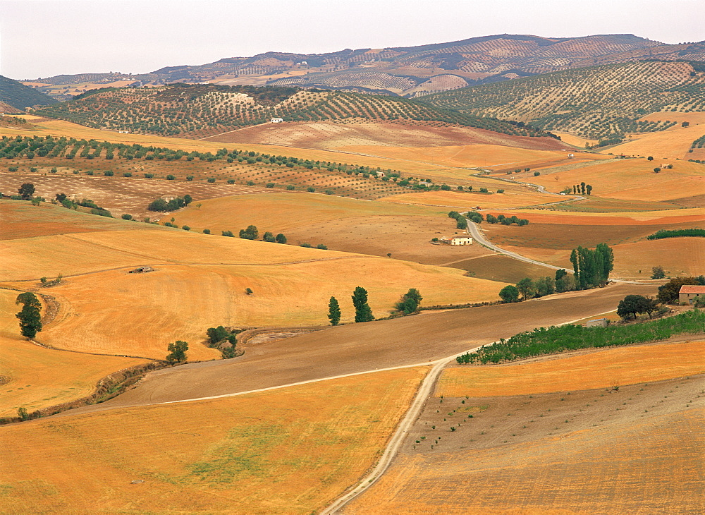 Agricultural landscape of fields, farms and olive trees in the background, in Andalucia, Spain, Europe