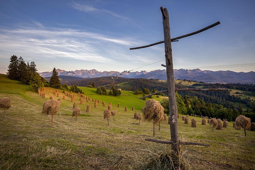 Hay stooks in foothills of Carpathian Mountains on outskirts of Bukowina Tatrzanska village, Southern Poland, Europe - 385-1775