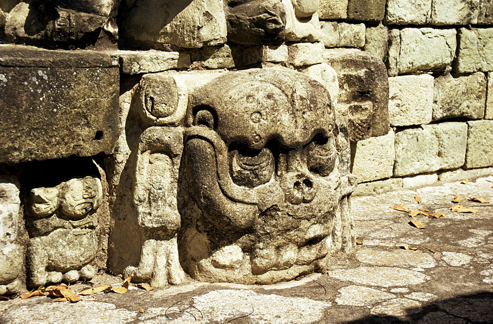 Mayan carved stone skull on top of East Court, dating from 8th century, Copan, UNESCO World Heritage Site, Honduras, Central America
