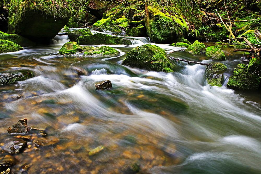 Forest brook, Schiessendümpel, Müllerthal, Luxembourg