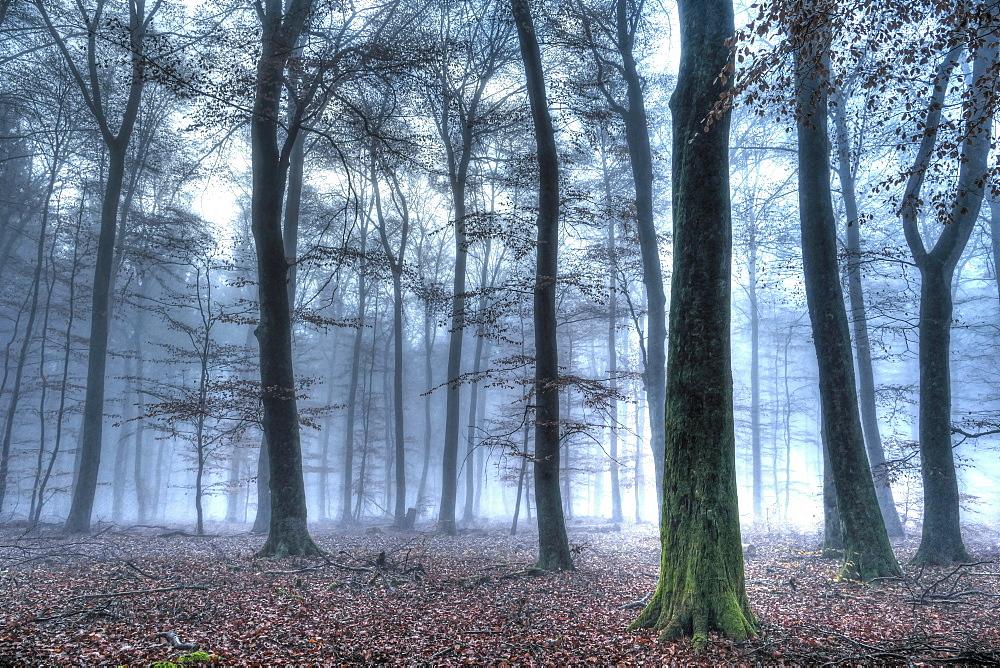 Autumnal forest, Rhineland-Palatinate (Rheinland-Pfalz), Germany, Europe