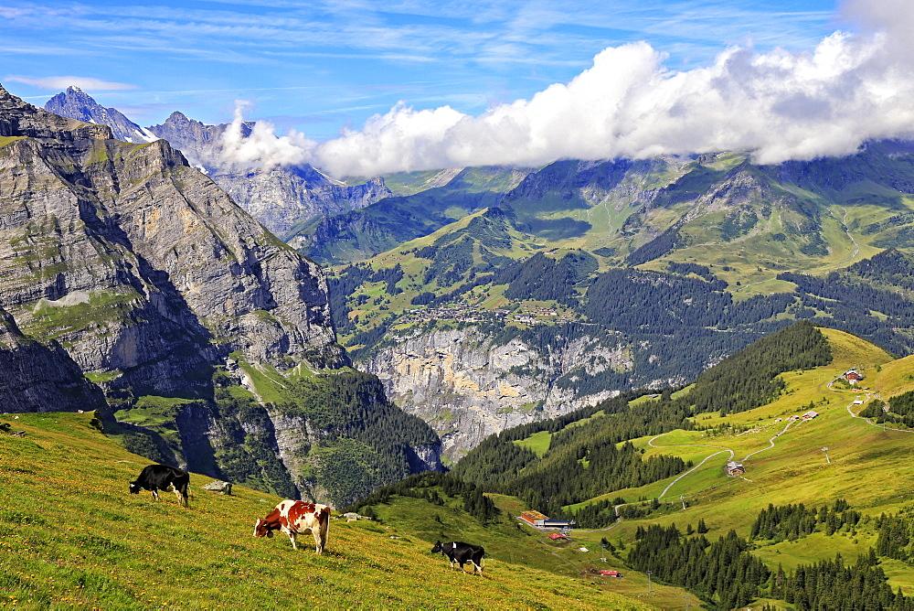 View from Kleine Scheidegg to Murren and Lauterbrunnen Valley, Grindelwald, Bernese Oberland, Switzerland, Europe