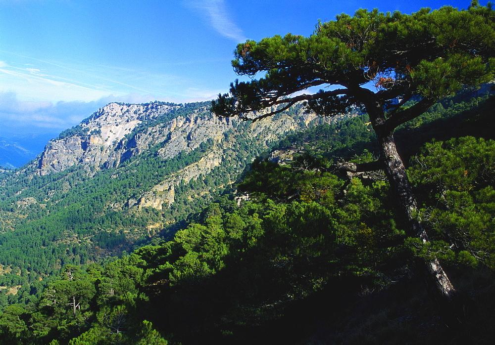 Cazorla National Park, Sierra del Pozo, Andalucia, Spain - 397-1175