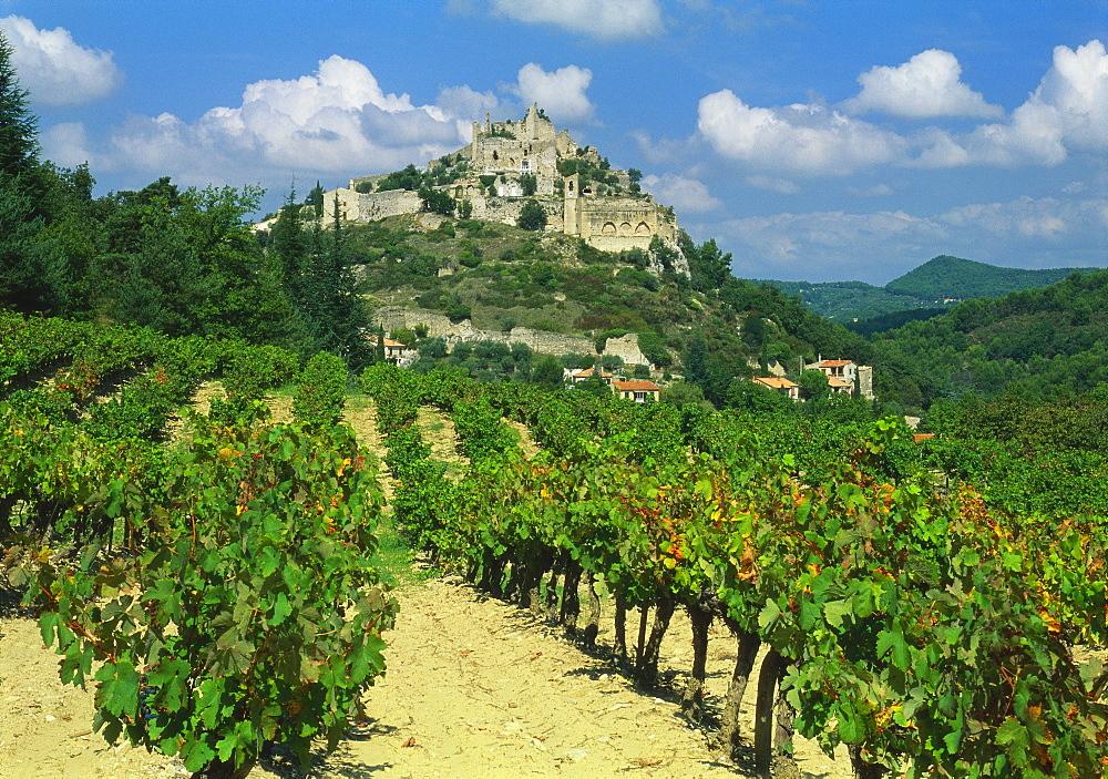 Vineyard, Entrechaux, Vaucluse, France - 397-2170