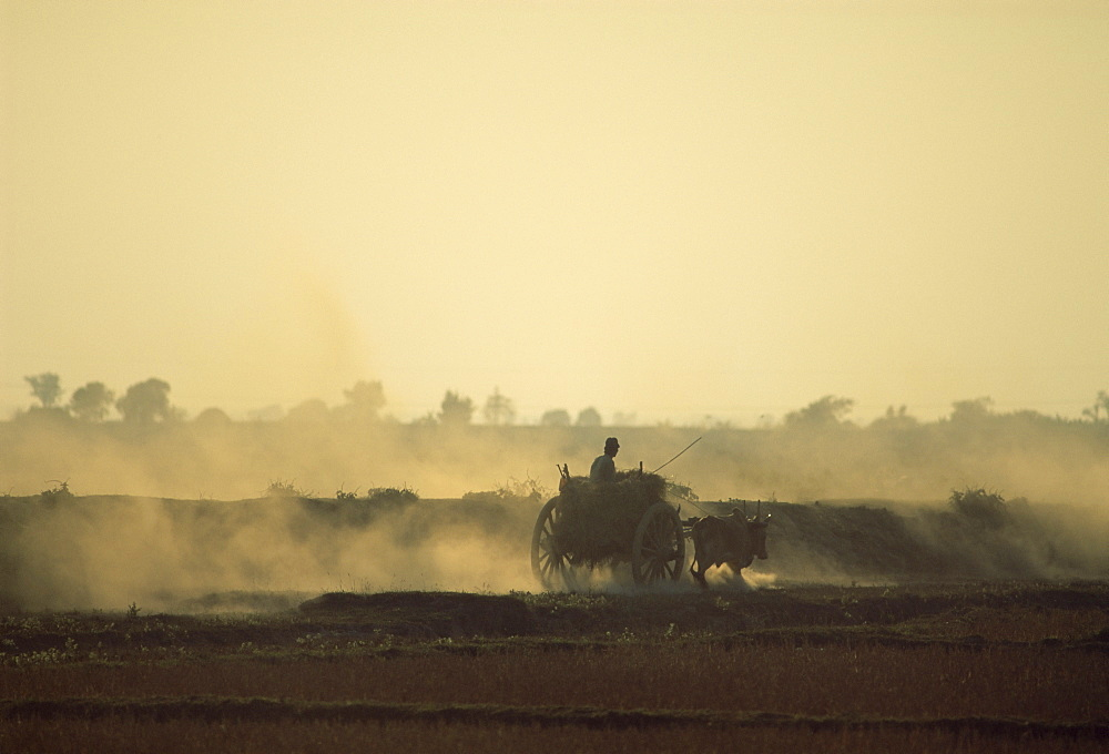 Bullock cart returning home in the evening, near Bago (Pegu), Myanmar (Burma), Asia