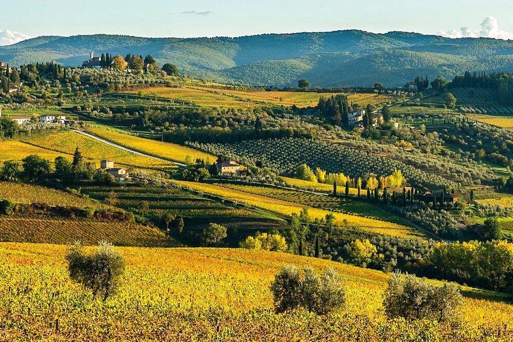 View of valley of Panzano in Chianti: patterned lines of vineyards, cypresses and olive trees with farmhouses, Tuscany, Italy - 450-4454