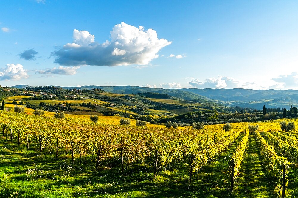 View of valley of Panzano in Chianti: patterned lines of vineyards, cypresses and olive trees with farmhouses, Tuscany, Italy - 450-4457