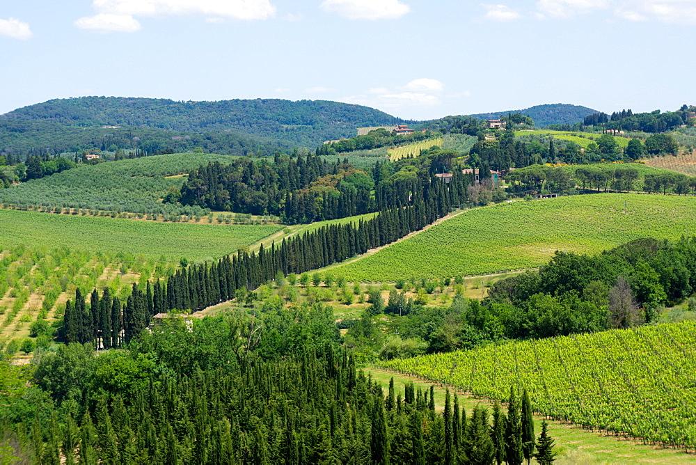 Vineyards and cypress trees, Chianti region, Tuscany, Italy, Europe