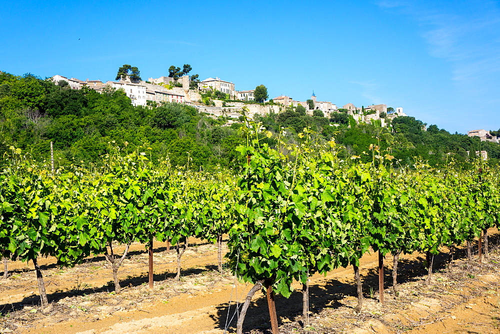 Menerbes and vines, Luberon, Provence, France, Europe