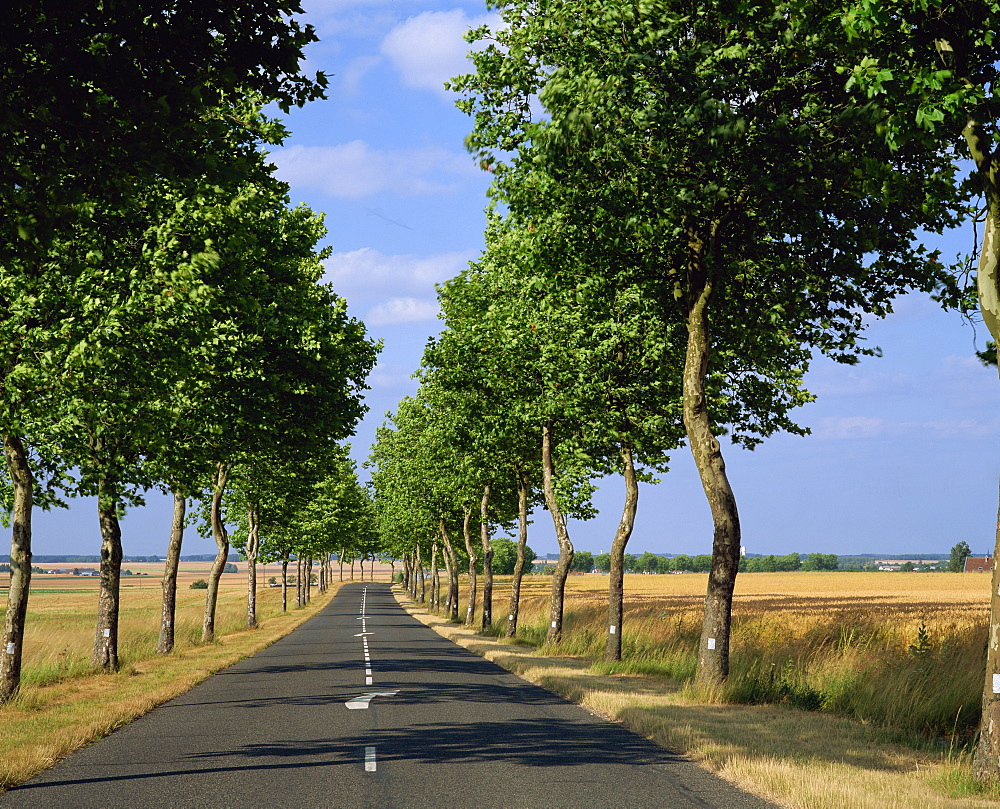 "High Quality Stock Photos of ""straight road"" for Straight Road With Trees  589ifm"