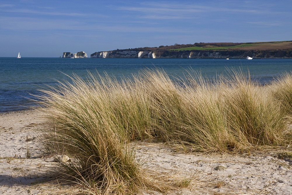 Studland Beach and The Foreland or Hardfast Point, showing Old Harry Rock, Isle of Purbeck, Dorset, England, United Kingdom, Europe - 485-9654