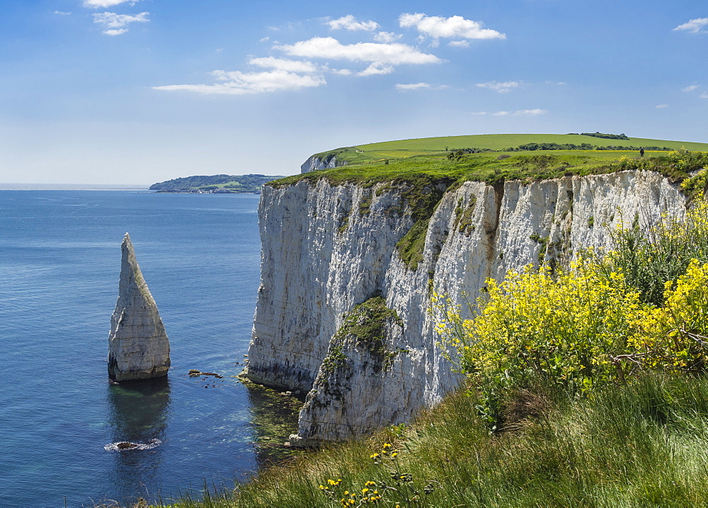 The Chalk cliffs of Ballard Down with The Pinnacles Stack in Swanage Bay, near Handfast Point, Isle of Purbeck, Jurassic Coast, UNESCO World Heritage Site, Dorset, England, United Kingdom, Europe - 485-9692