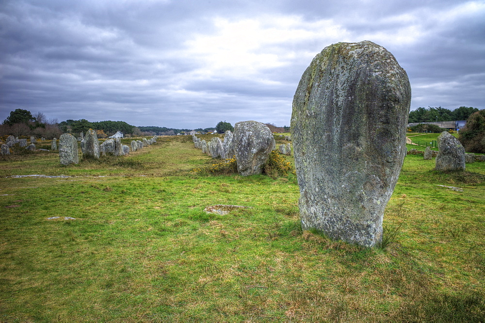Megalithic stones in the Menec Alignment at Carnac, Brittany, France, Europe - 492-3566