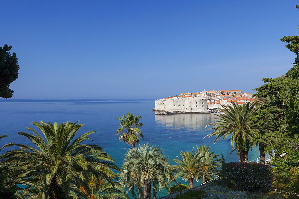 View of city across the sea and through palm trees, Dubrovnik, UNESCO World Heritage Site, Dalmatian Coast, Croatia, Europe  - 526-3767