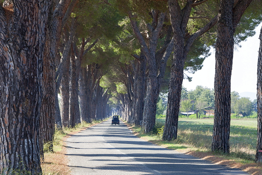 Pine tree lined road with small Piaggio three wheeled van travelling along it, Tuscany, Italy, Europe - 526-3807