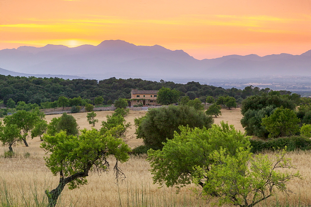View of landscape with olive trees and mountains at dusk with farmhouse in landscape, Majorca, Balearic Islands, Spain, Mediterranean, Europe - 526-3839