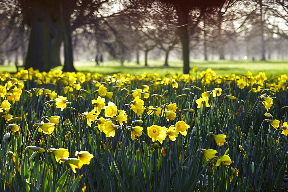 Hyde Park, London, England, United Kingdom, Europe - 627-1251