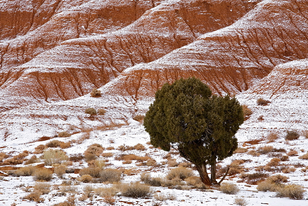Capitol Reef, Utah, United States of America, North America - 667-2260