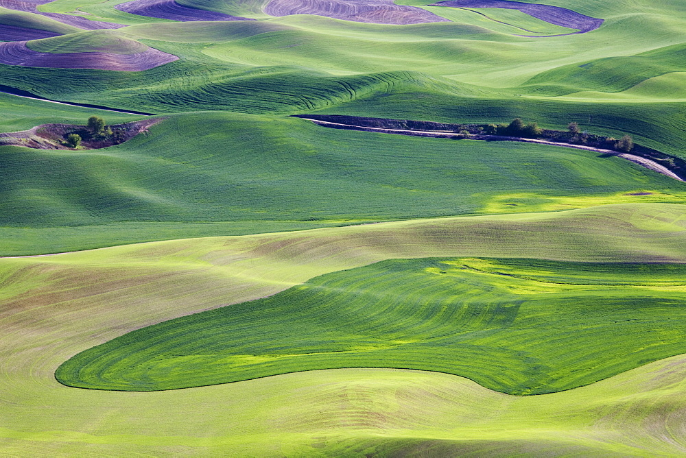 Spring in the Palouse, from Steptoe Butte, Washington State, United States of America, North America