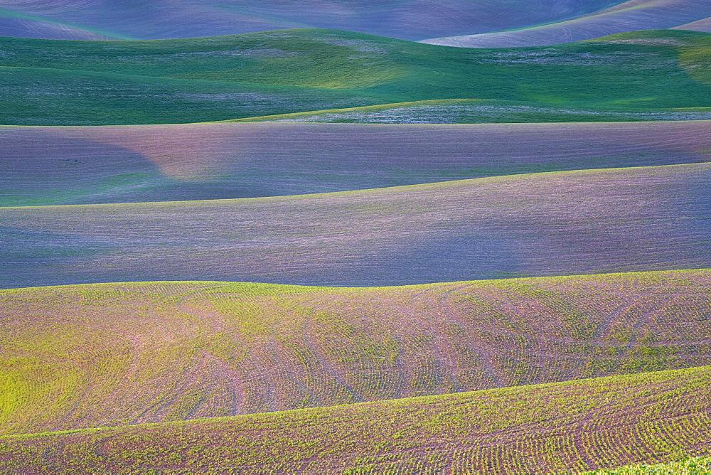 Field patterns at dawn, Palouse, Washington State, United States of America, North America - 667-2400