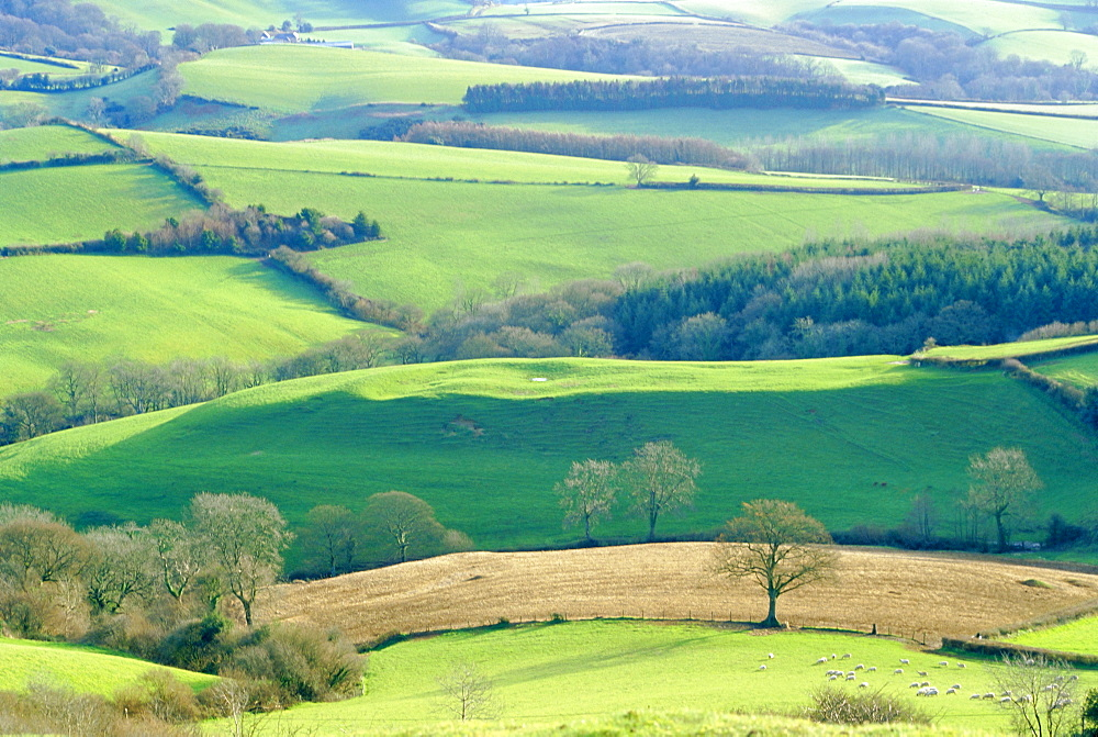 View from Pilsdon Pen, the highest hill in the county, Dorset, England, UK