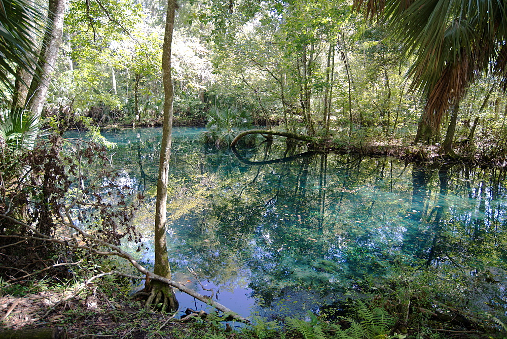 Natural Springs at Silver Springs State Park, where the original Johnny Weismuller Tarzan films were made, Florida, United States of America, North America - 685-2663
