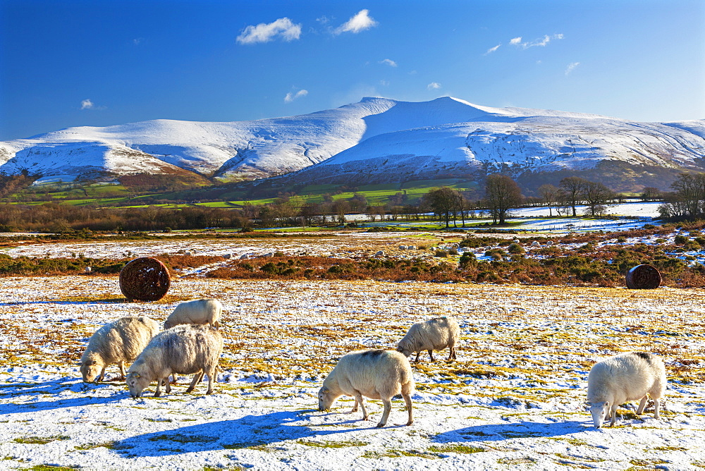 Brecon Beacons National Park, Wales, United Kingdom, Europe - 696-812