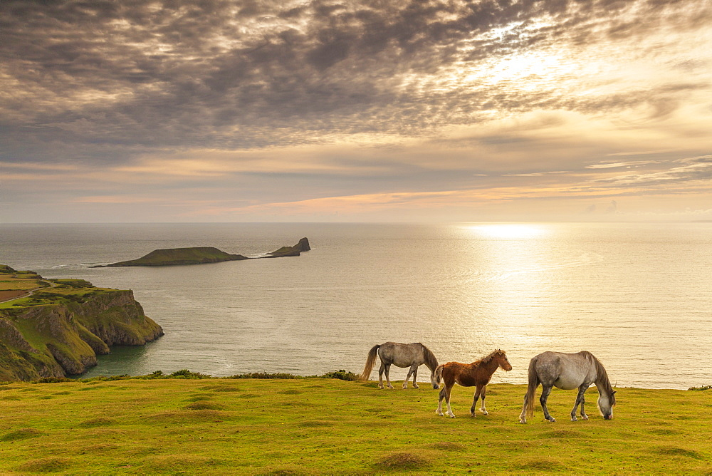 Rhossili Bay, Gower, Wales, United Kingdom, Europe - 696-819