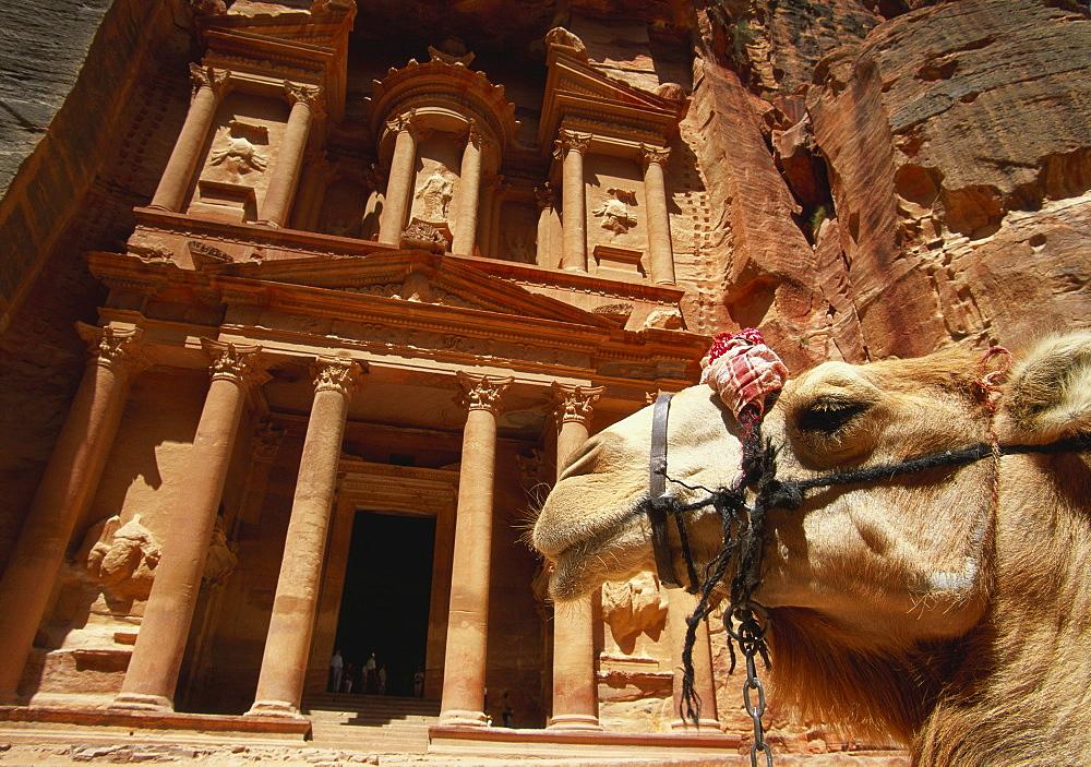 Camel and Low Angle View of the Khazneh, Petra, Jordan