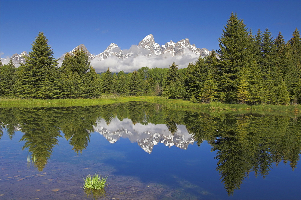 The Cathedral Group of Mount Teewinot, Mount Owen and Grand Teton reflected in the Beaver Pond, Schwabacher's Landing, Grand Teton National Park, Wyoming, United States of America, North America