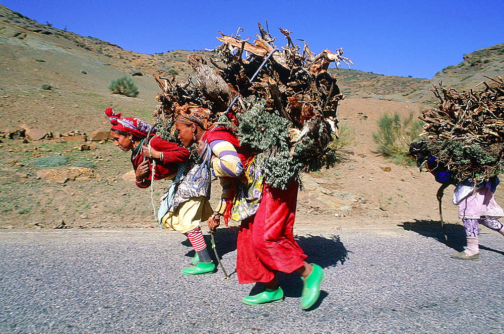 Morocco, South, Ouarzazate Region, Young Berber Girls Fetching Wood For Cooking