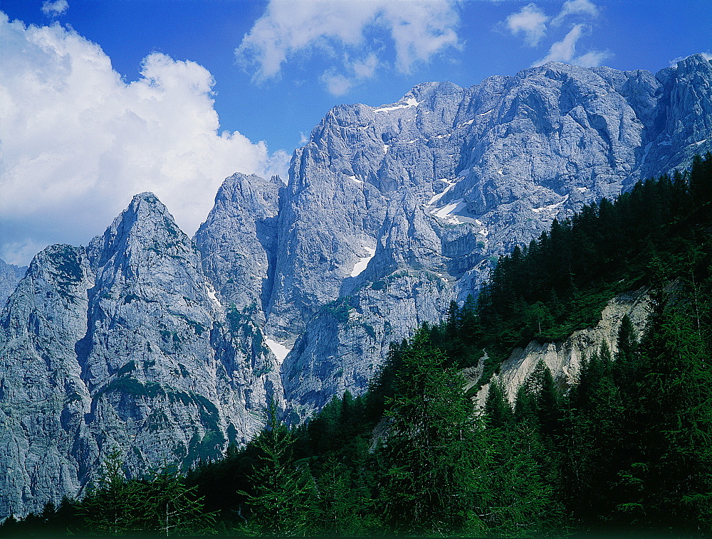 Slovenia, The Alps, Mountains And Pine Forest In The Upper Soca Valley