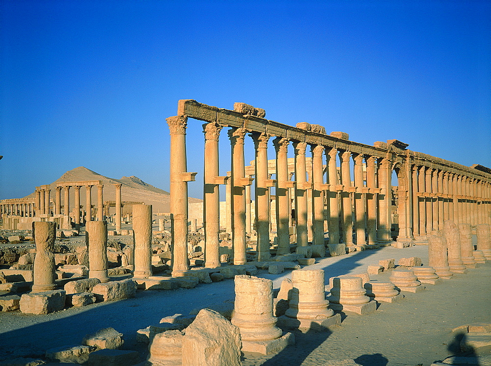Syria, Palmyra Oasis, The Roman Ruins, Remnants Of The 1200m Colonnade Edging The Cardo (Main Road In The Roman City Center)  - 700-11624