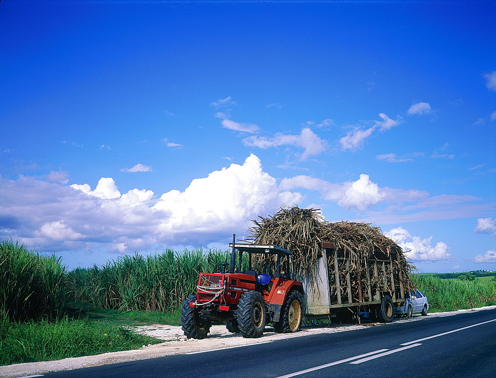 French West Indies, Guadeloupe, Farm Tractor And Trailer Loaded With Harvested Sugar Cane