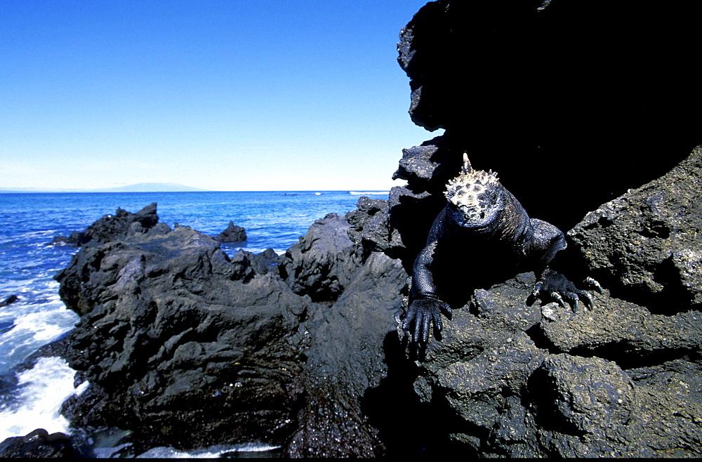 Ecuador, Galapagos Archipelago, Cruise On Board Of Ms Santa Cruz, Isabella Island, Urbina Bay