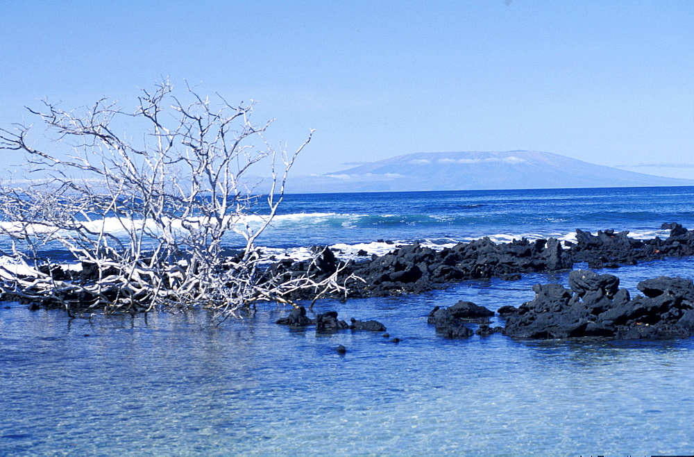 Ecuador, Galapagos Archipelago, Cruise On Board Of Ms Santa Cruz, Espanola Island, Punta Soares,