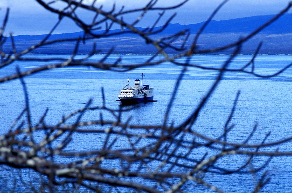 Ecuador, Galapagos Archipelago, Cruise On Board Of Ms Santa Cruz, Isabella Island, Tagus Cove,