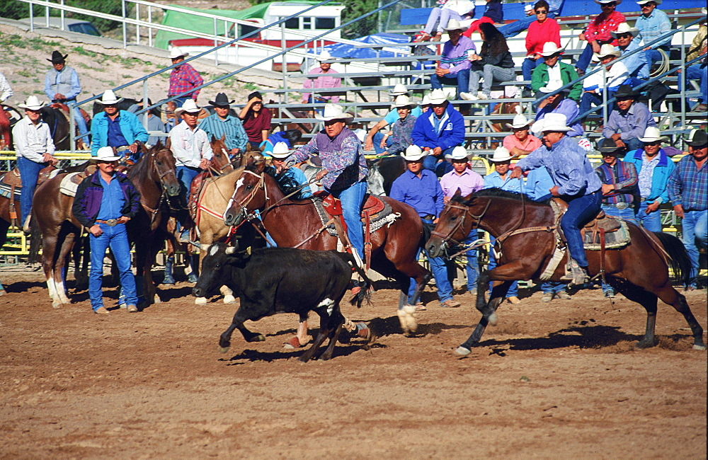 Usa, Arizona, Window Rock Fair, Rodeo Calf Roping