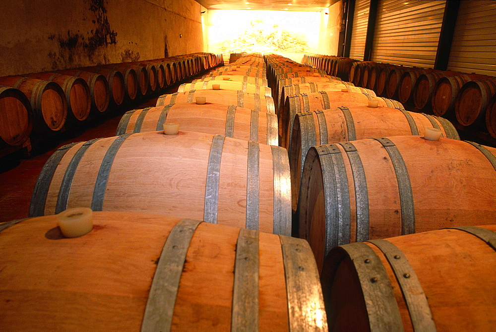 France, Corsica, South, Ajaccio (Near), Cellars Of Comte Peraldi Winery, Lining Oak Barrels