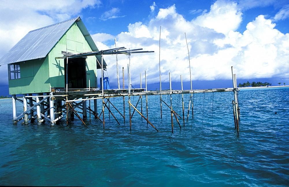 French Polynesia, Tuamotus Archipelago, Black Pearls Farm On The Tikehau Lagoon
