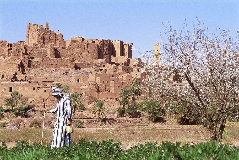 Farmer in field, Kasbah of Tifoultout (Tifoultoute), Morocco, North Africa, Africa - 700-9720
