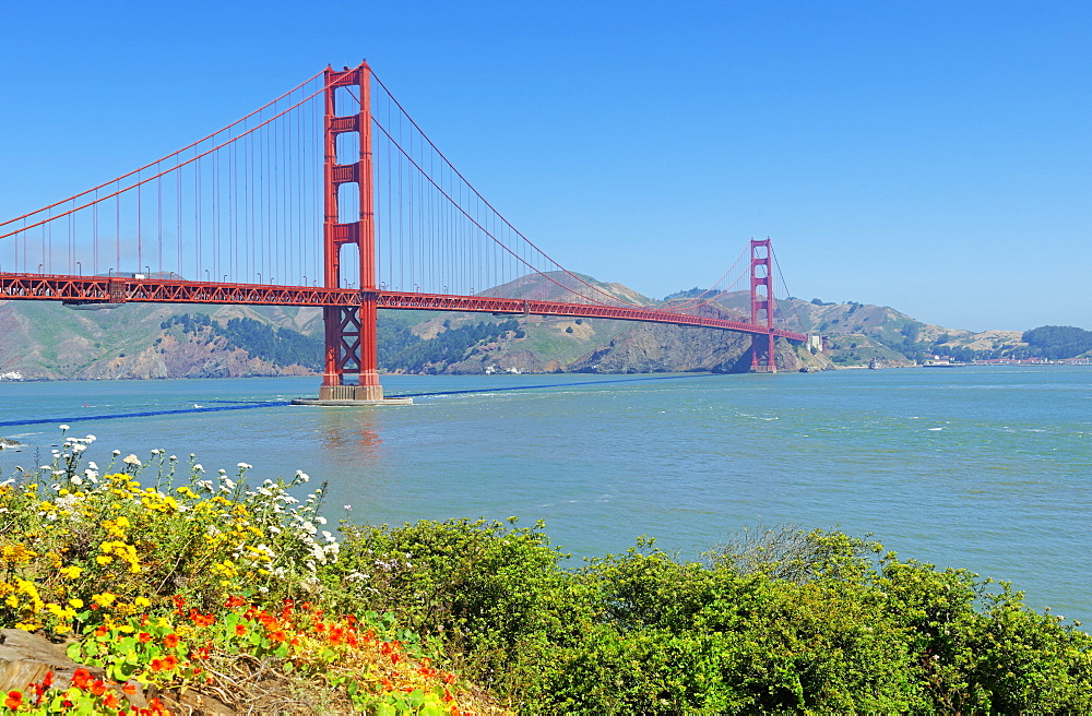 Golden Gate Bridge with flowers on hillside in foreground, San Francisco, California, United States of America, North America