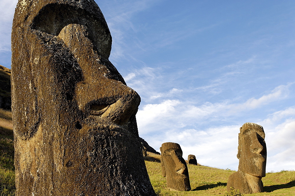 Moai in the Rano Raraku volcanic crater formed of consolidated ash (tuf), Easter Island, UNESCO World Heritage Site, Chile, South America