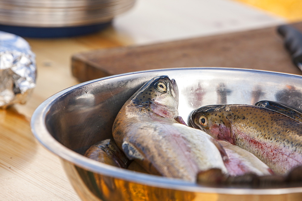 Fresh trout ready to cook, Scotland, United Kingdom, Europe