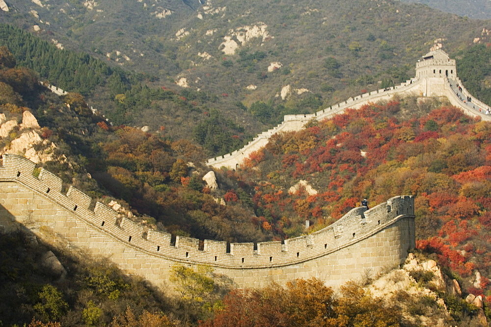 Autumn colours and a watch tower on The Great Wall of China, UNESCO World Heritage Site, Badaling, China, Asia
