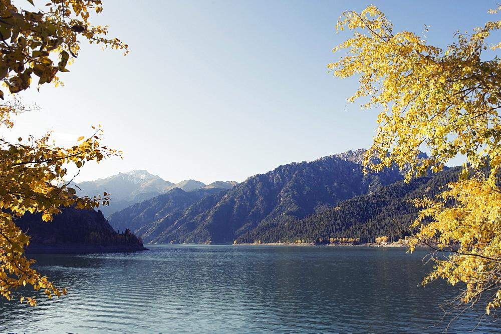 Autumn leaves at Tian Chi (Heaven Lake), Xinjiang Province, China, Asia