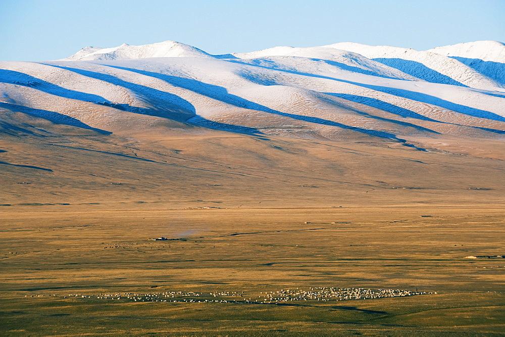 Sheep grazing on the plains in Bayanbulak, Xinjiang Province, China, Asia